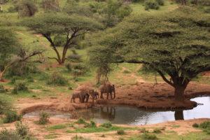 Elephants-at-waterhole