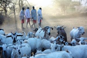 KENYA-2013-096